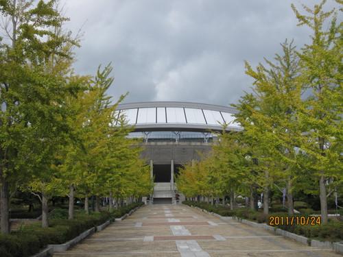イチョウ 2011-10-24