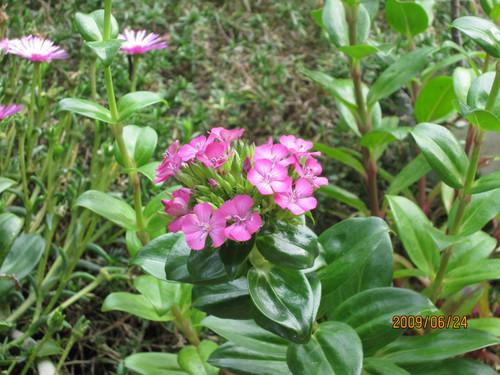 ナデシコ 2009-06-24